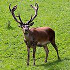 Oh, deer! by Helkramu