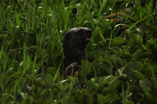 I Otter be in Pictures by Kim McClain Gregal