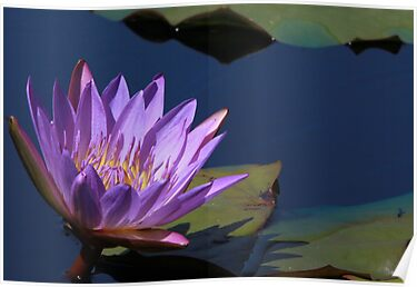 Tina Water Lily by Robert Armendariz