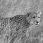 Blending in by Explorations Africa Dan MacKenzie