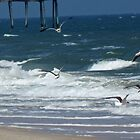 Flying Seagulls by Cynthia48