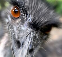 Angry Emu by jomtien