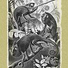 Chameleons by Beesty