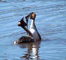 Bird love in the air by Susanna Hietanen