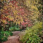 The Autumn Path by Barb Leopold