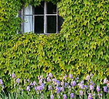Cottage Window and Irises by Melodee Scofield
