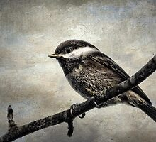 Chick-Chick-Chickadee by TeresaB