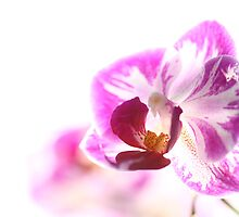 Beauitful orchids by jamesnortondslr