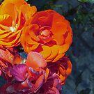 Red/Orange Flowers by TesniJade