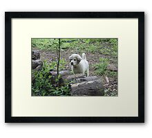 "Goliath "" Did Someone Call?"" Framed Print"