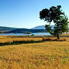 Tree and Lake by photoshot44