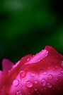 After The Rain... by Ainsley Kellar Creations