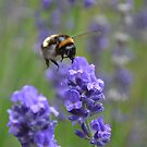 Busy Busy Bumblebee by Louise Lench