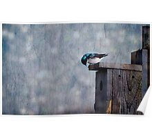 The Adventures of Barney the Barn Swallow Poster