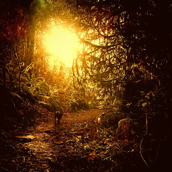 Magic Hour by KeriFriedman