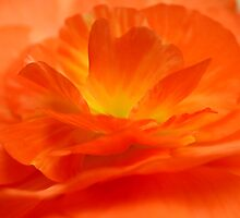 Begonia layers by mooksool