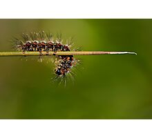 Mix Caterpillar Photographic Print