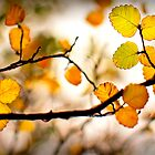 A Tasmanian Autumn by Jocelyn  Parry-Jones