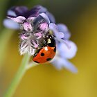 Forget me not ladybird by Artizana