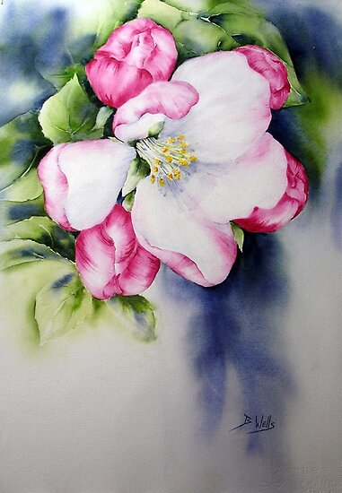 Apple blossom by Bev  Wells
