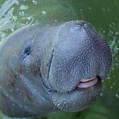 Smiling Manatee by lgraham