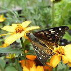 Painted Lady Butterfly On Flower by ack1128