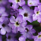 Tiny purple flowers by jamesnortondslr
