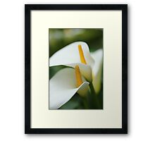 Tranquil orchids Framed Print