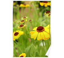 Yellow flowered field Poster
