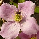 The Fly On The Clematis by Fara