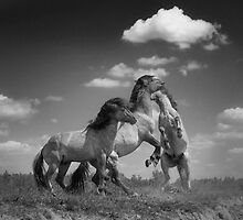 Wild Horses (1 of 2) by Henri Ton