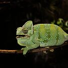 Chameleon by Louise Lench