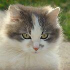 Feline Freedom by PatChristensen