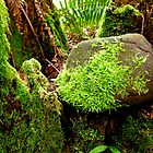 Lush Spring Moss by Elaine Bawden