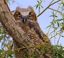 Hootie by John Absher