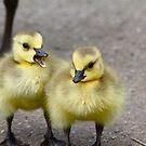 Gabby Gosling... by RichImage