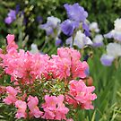 Pink & Purple by teresalynwillis