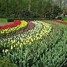 Arcs of Colour - Keukenhof Gardens by MidnightMelody
