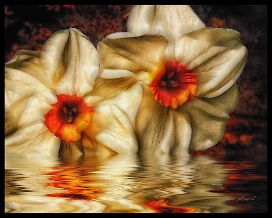 Daffodip by Keri Harrish