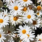 Filled with Daisies by Omar Dakhane