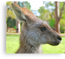 What's that Skippy? Canvas Print
