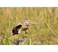 Red Shoulder Hawk Taking Flight Photographic Print