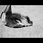 pocket nap by kimbo74