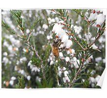 Honeybee On Flower Poster
