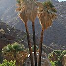 Desert Palms by heatherfriedman