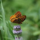 Butterfly Delight by Rick  Friedle