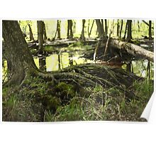White River Marsh Landscape 6799 Poster