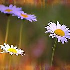 *Dreamy Daisies* by DeeZ (D L Honeycutt)