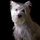 West Highlands White Terrier Puppy by Edward Fielding