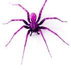 Spider  by Ian Jeffrey